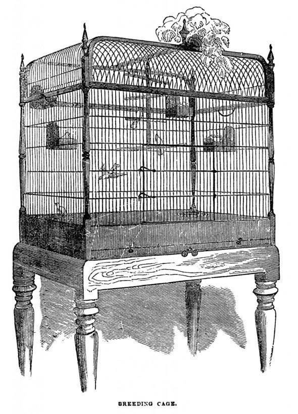 vgosn_free_vintage_bird_cage_clip_art_image