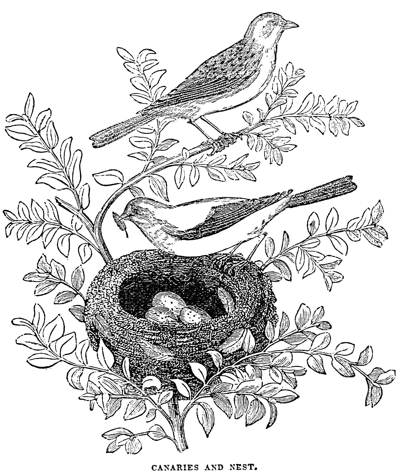 Free Vintage Birds Clip Art Images