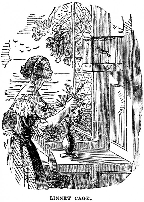 vgosn_vintage_clip_art_illustration_girl_bird_cage_3