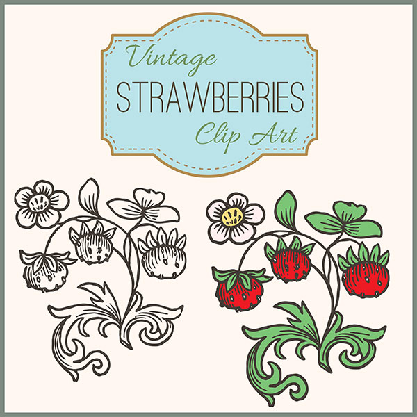 images stock free, royalty free images commercial use, images strawberries, graphics vector, vector image download, stock free images, royalty free images for commercial use, stock vector images,