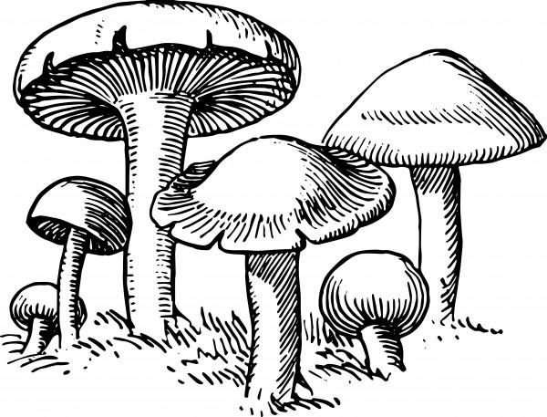 vgosn_mushroom_vintage_vector_clip_art_1