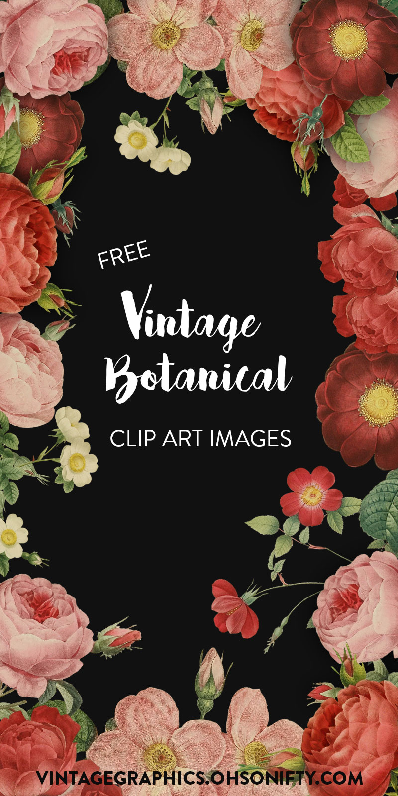 Free Clipart Images | Vintage Botanical Roses and Flowers
