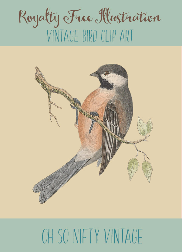 Royalty Free Illustrations | Vintage Bird Clip Art | Siberian Tit