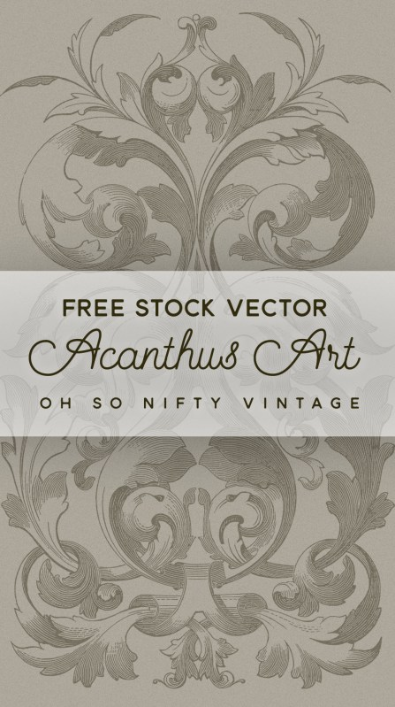 Beautiful Acanthus Art Stock Vector