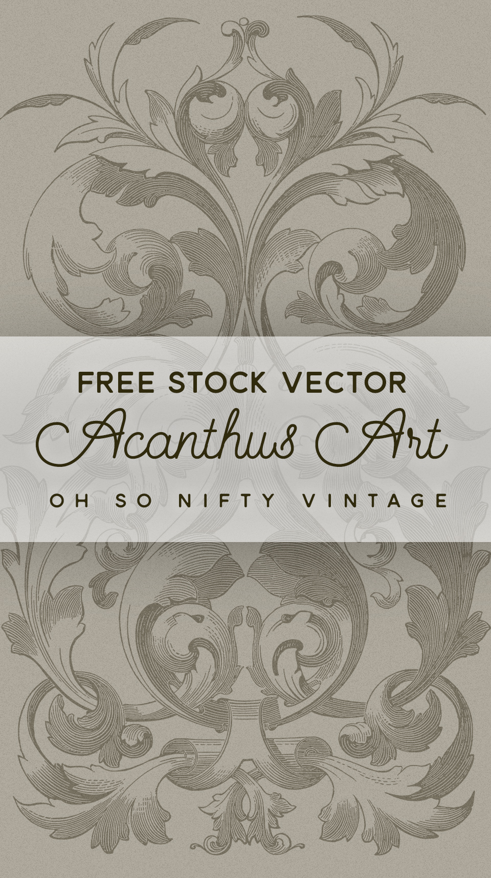 Beautiful Acanthus Art Stock Vector