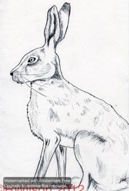 Moon Gazing Hare (pen & ink sketch)