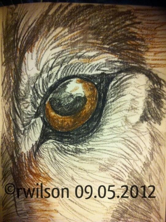 Wolf Eye (charcoal)