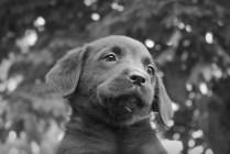 Hunter - Adopted!