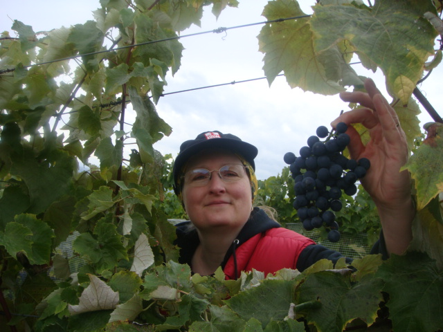 virginia grapes