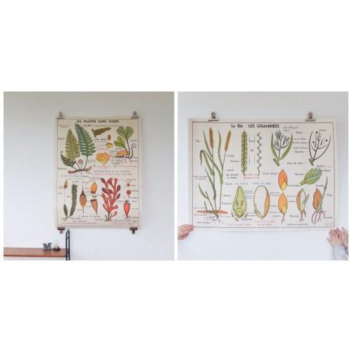 Affiche scolaire Les plantes sans fleurs & Le blé, les graminées.