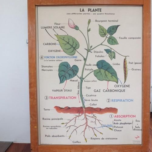 La plante & la germination - affiche scolaire.
