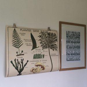 Affiche scolaire Rossignol 11 & 12: plantes sans fleurs & classification des végétaux
