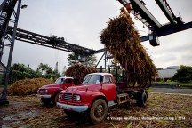 Old Red Bedford J6 Trucks Unloading - Mon Desert Alma - Mauritius - Father and Son