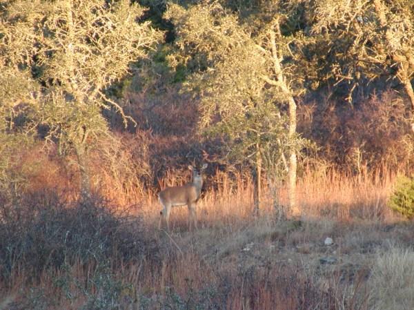 2002 Deer Hunting December Photos