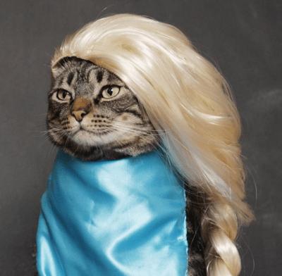 Cansei de ser gato, agora vou ser Elsa