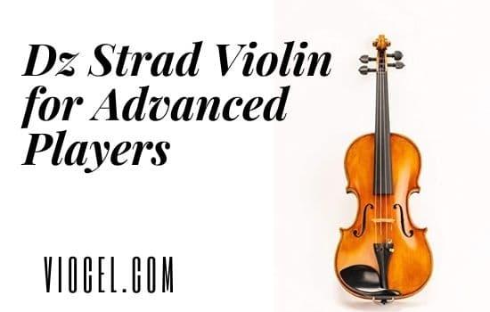 Dz Strad Violin for Advanced Players