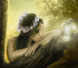 Beautiful-fairy-yorkshire_rose-22221388-700-613