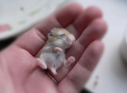 Cutest-Baby-Animals-10-590x434