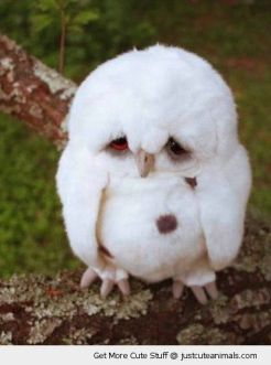 cute-animals-sad-baby-owl-owlet-fluffy-white-feathers-pics