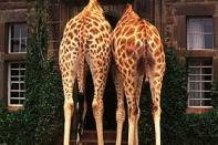giraffe_manor_main