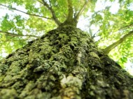tree-dreams.jpg