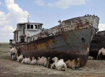 Shipwreck-surrounded-by-camels-in-the-desert