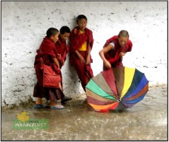 s.child_lamas_playing_in_the_rain