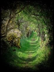Ballynoe-Co-Down-Ireland