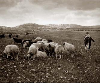 shepherds-bethlehem