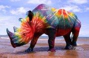 Rhino_Tie_Dye_by_living_on_mars