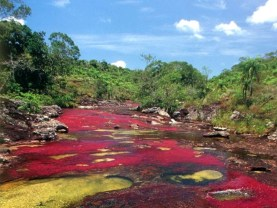 cano-cristales-river-of-five-colors-colombia-woe9