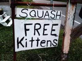 SquashFreeKittens