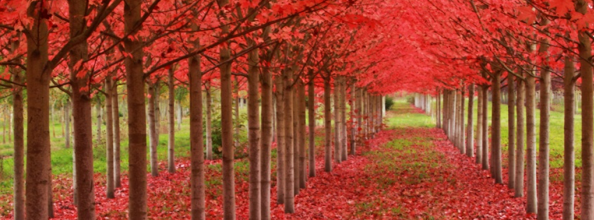 Nature Facebook Covers 2