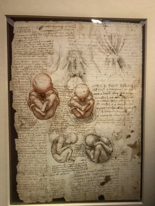 Leonardo's study of foetus development