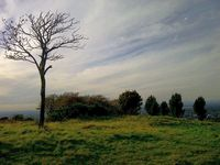 Werneth-low-hyde-winter-violet-skies