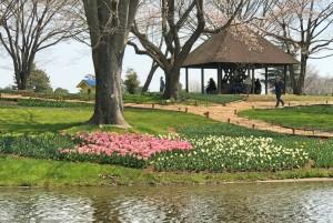 2017-4-5昭和記念公園