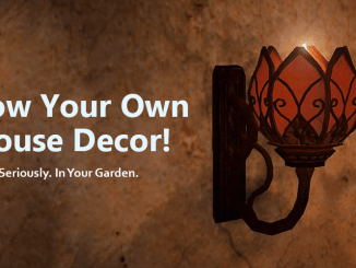 Grow your own house decor in BDO - Violet Astray guide