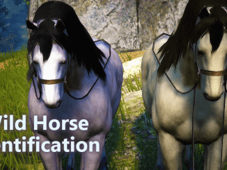BDO Wild Horse Identification Tier 1 and Tier 3 Taming Horses
