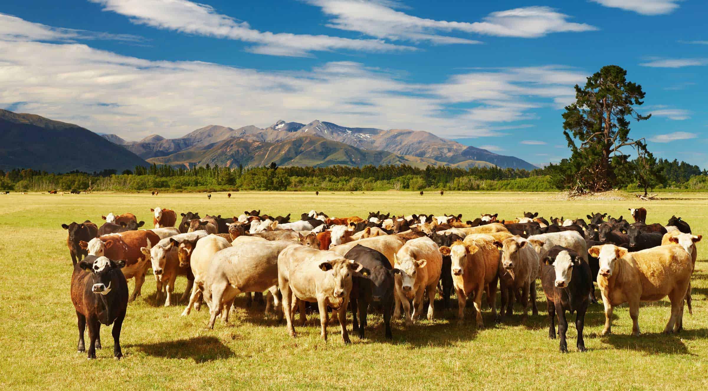 Subvenţii achitate pentru 98,12% dintre fermieri! Ce spune APIA despre softul de plăţi