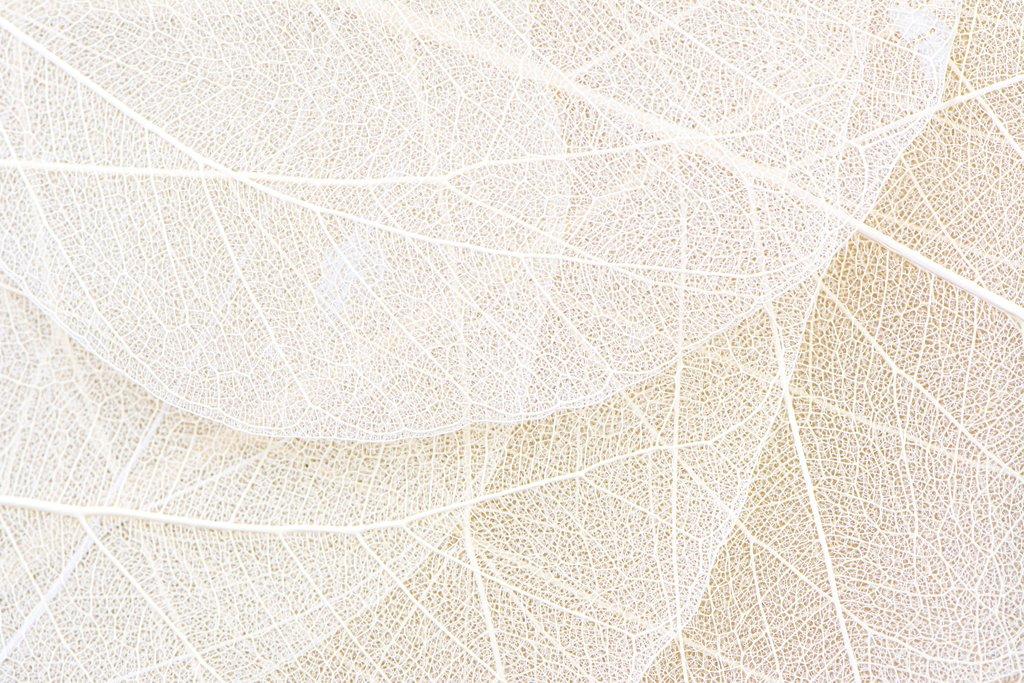 Transparent Overlays of Off-White Leaf Veins