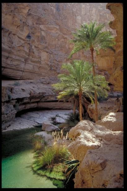 Einzigartig schön: Oasen im Landesinnern. Foto Copyright: Ministry of Tourism, Sultanate of Oman