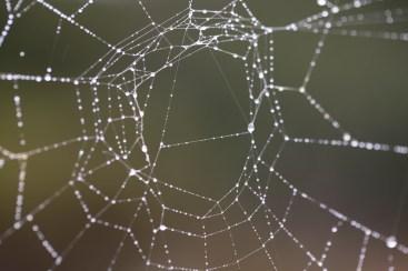 Dew on Spider Web near Ballast Point Overlook