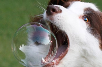 Week in Review: Pet startups will be the death of Silicon Valley – TechCrunch