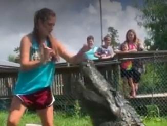 pige fodrer alligator