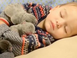 baby hvalpe sove