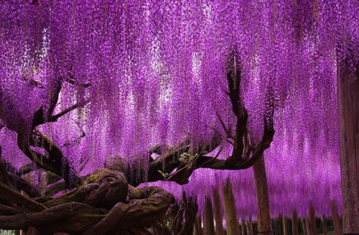 Most Beautiful Trees In The World 7