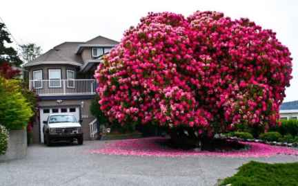 Most Beautiful Trees In The World 6