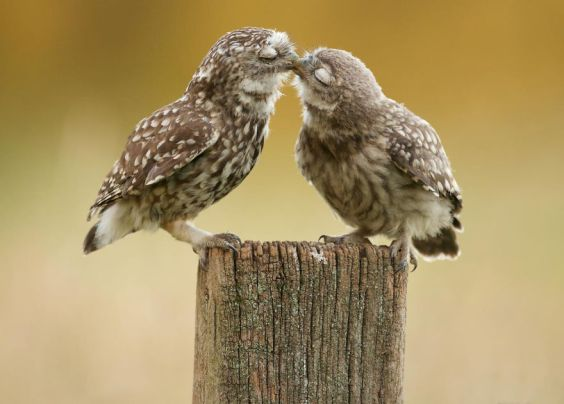 animals in love 8