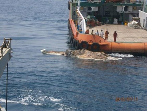 Gigantic-sea-Creature-1