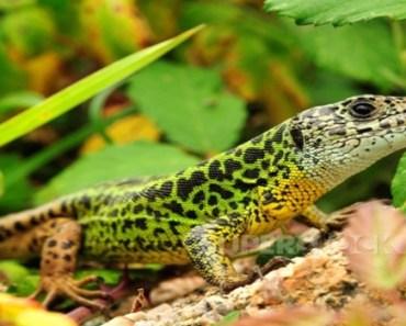 15 Marvelous Lizards